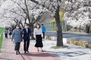 영천시(최기문시장) 벚꽃100리길로에서  함께 즐겨보세요~